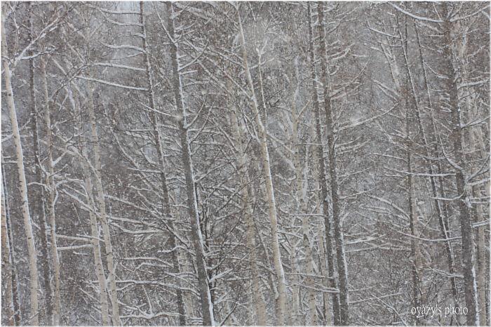 雪_a0071514_23421184.jpg