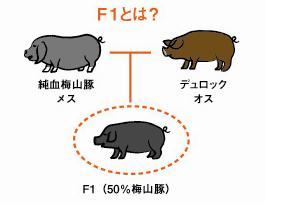 第9回~種豚の統一_b0166530_1344066.jpg