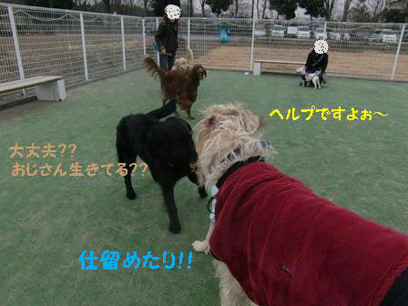 f0176830_21201924.jpg
