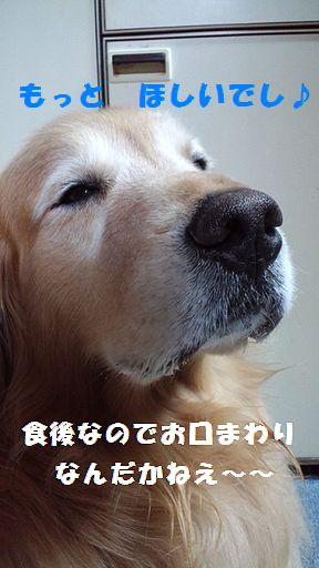 b0127531_190184.jpg