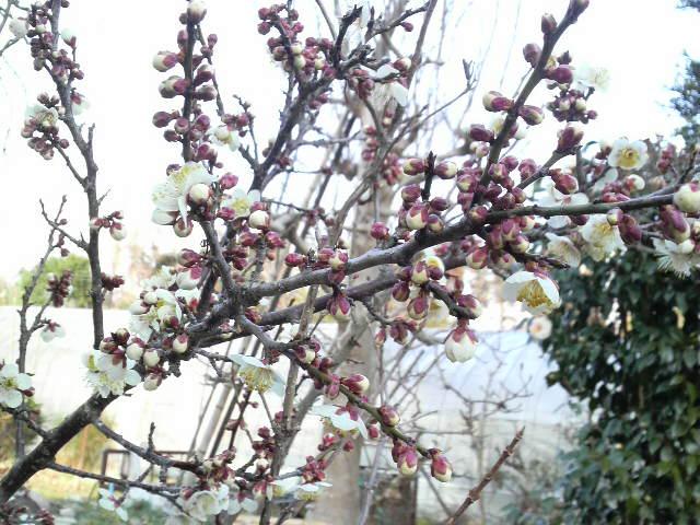 春も近いのか遠いのか?_b0100432_10124185.jpg
