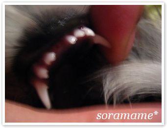 乳歯から永久歯へ・・・。_c0180949_9232766.jpg