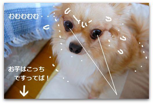 b0112758_19123541.jpg