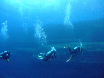 これが海底遺跡だぁ~        与那国島_e0184067_14402916.jpg