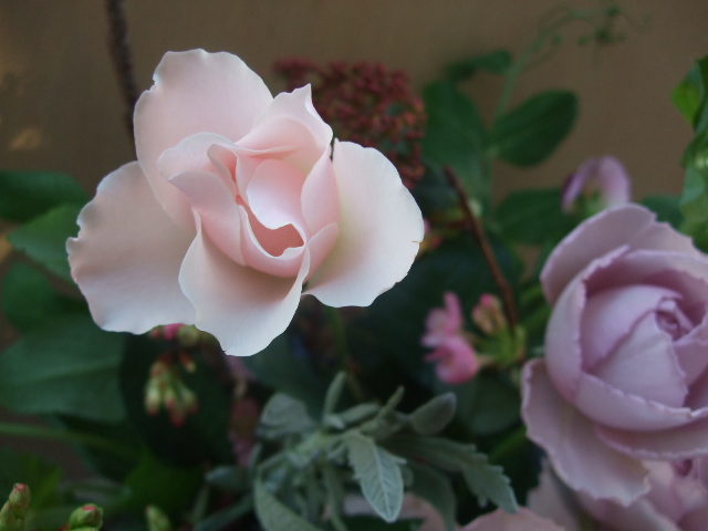 オークリーフ(河津桜とバラのアレンジメント)_f0049672_14291262.jpg