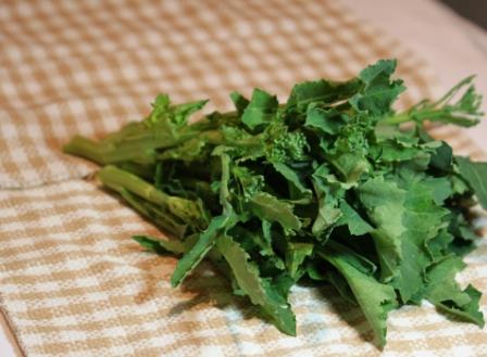 この野菜なんでしょう?_c0214278_2022298.jpg