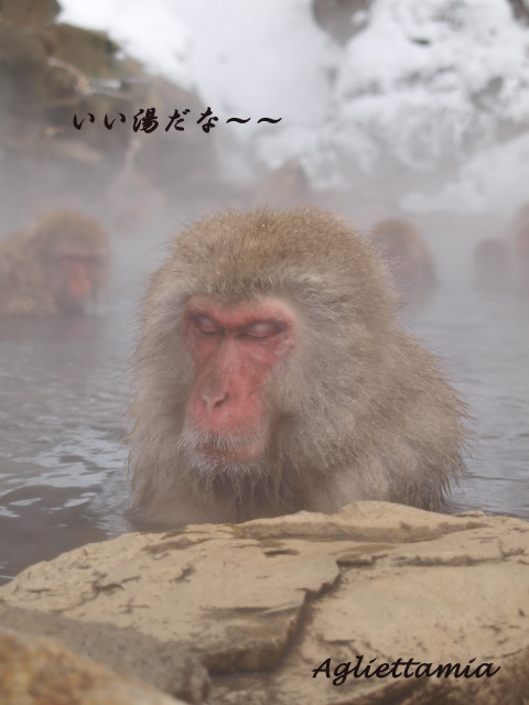 湯けむり温泉・・・Snow monkeys....._c0179785_22125457.jpg
