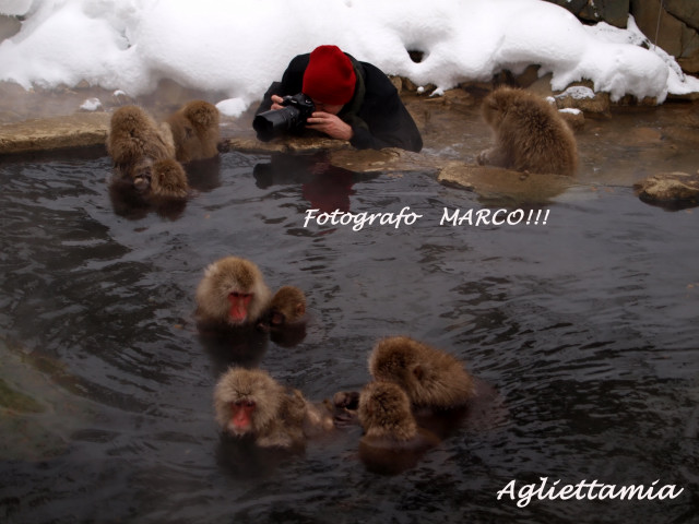 湯けむり温泉・・・Snow monkeys....._c0179785_2236566.jpg