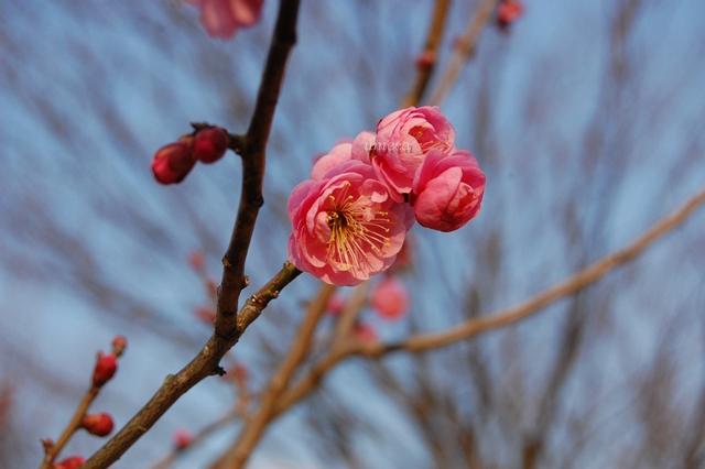 春告草リベンジ編_a0155999_23521457.jpg