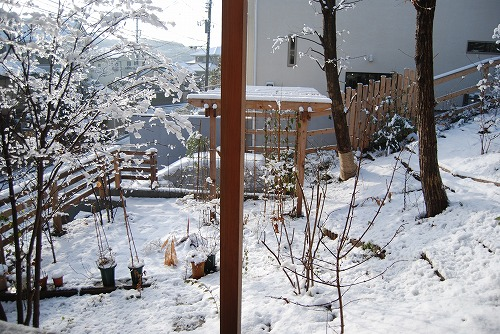 雪あがりの朝…_c0124100_12274441.jpg