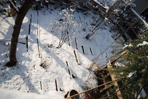 雪あがりの朝…_c0124100_12282298.jpg