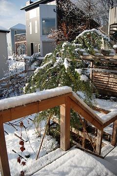 雪あがりの朝…_c0124100_12301195.jpg