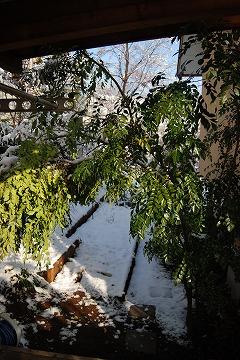 雪あがりの朝…_c0124100_12302321.jpg