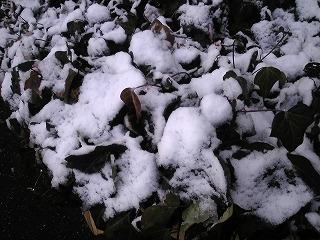 2月2日 雪景色/田村編_a0131903_10184155.jpg