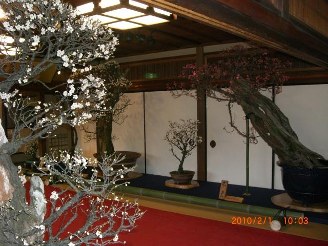 長浜盆梅展_e0150006_1315049.jpg