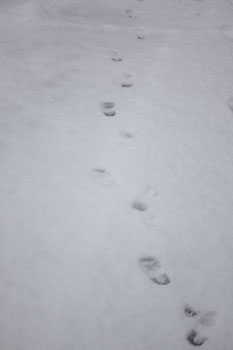 初雪_f0208315_10333122.jpg