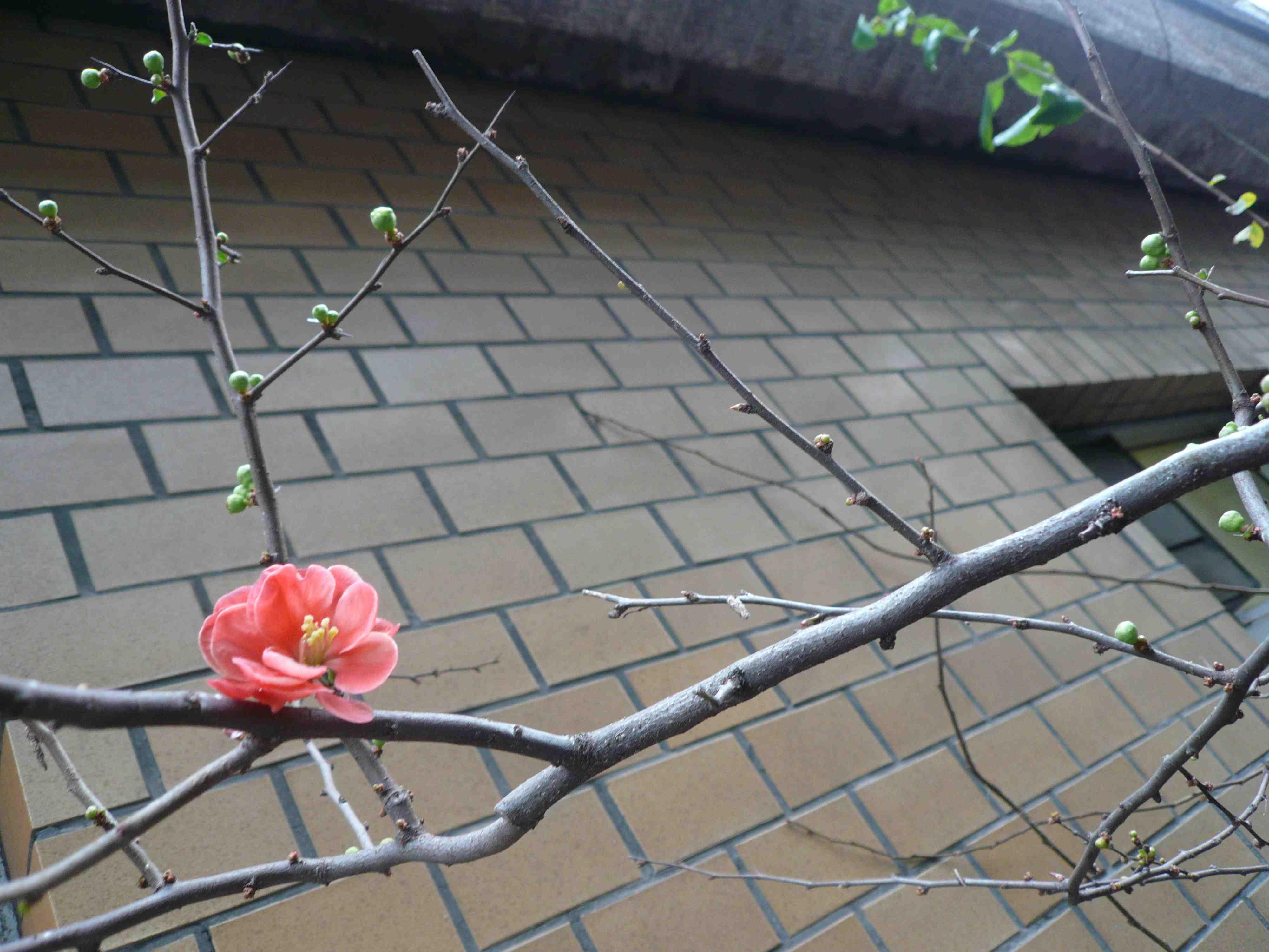 春の予感_b0099226_1431196.jpg