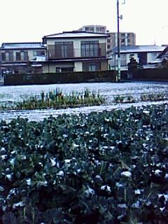 お~お~!....初雪だ!_b0137932_19434476.jpg