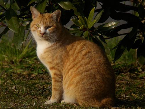 水元公園で見た猫その2_e0089232_2131143.jpg