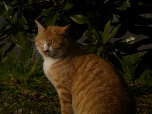 水元公園で見た猫その2_e0089232_2131844.jpg