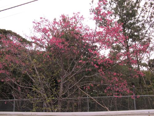 2月2日東京と気温差20度!!沖縄は晴天です。_c0070933_2229343.jpg