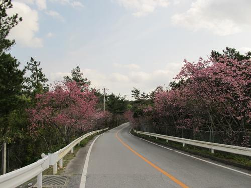 2月2日東京と気温差20度!!沖縄は晴天です。_c0070933_2229947.jpg