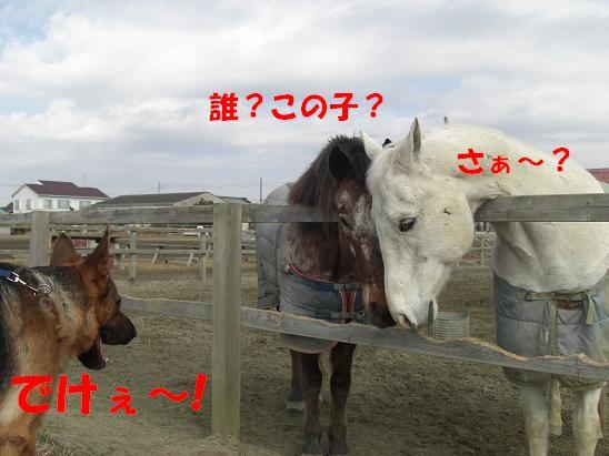 c0192541_1955213.jpg