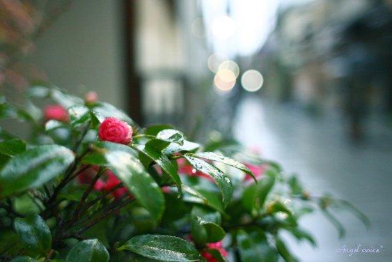 雨なら雨で・・・_d0147742_20285945.jpg
