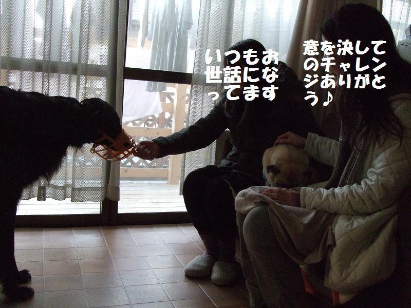 f0192246_1645593.jpg