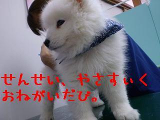 a0166954_20123687.jpg