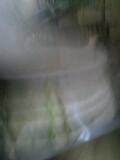 d0007957_2046461.jpg