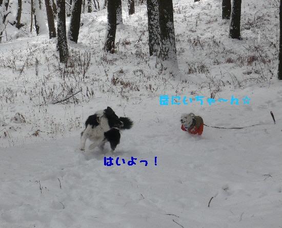 f0203369_19354632.jpg