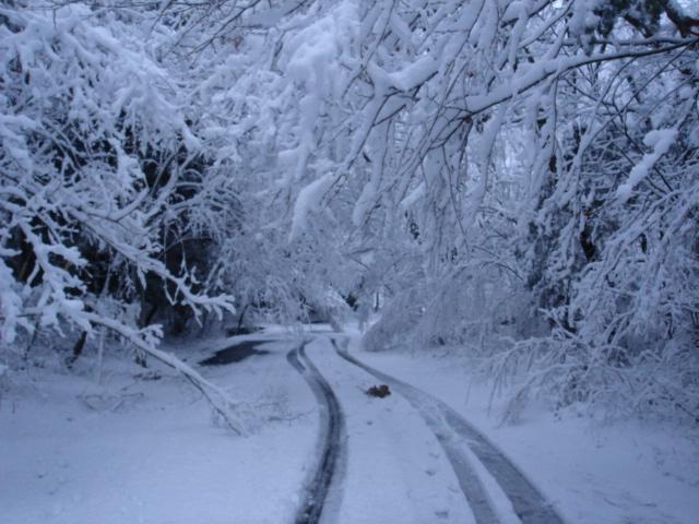 雑木林に積もる雪