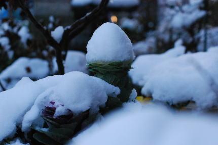 雪_d0091671_17543145.jpg