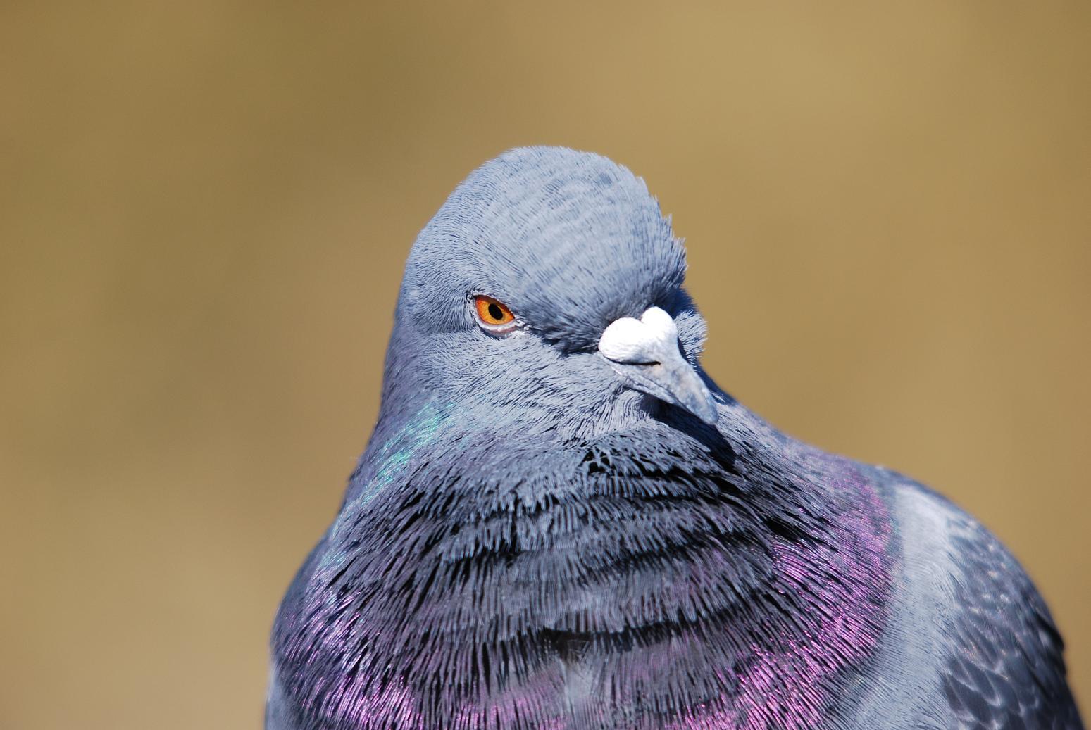 鳥人間_d0121678_1640662.jpg