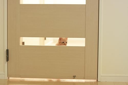 扉の向こうから呼びかける櫂っち