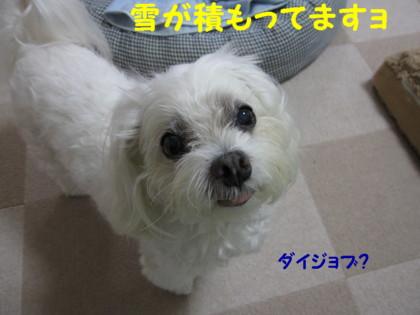 f0145192_14464076.jpg
