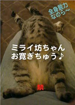 b0035734_114347.jpg