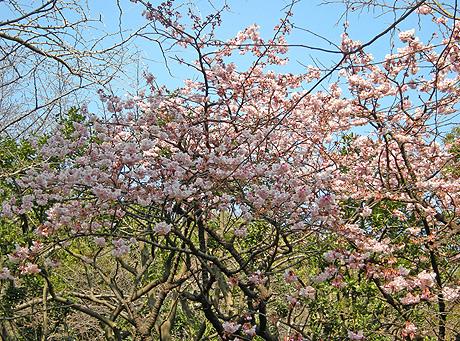 2月3日 上野散歩2010 上野公園点描_a0001354_2211545.jpg