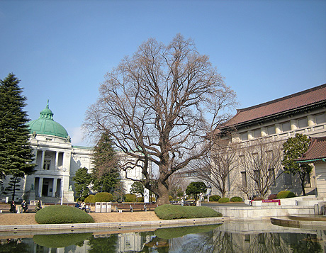 2月3日 上野散歩2010 上野公園点描_a0001354_222273.jpg