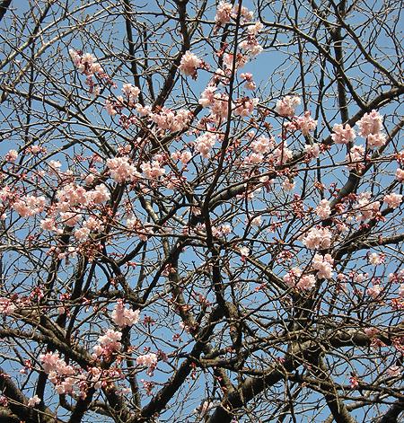 2月3日 上野散歩2010 上野公園点描_a0001354_2294030.jpg