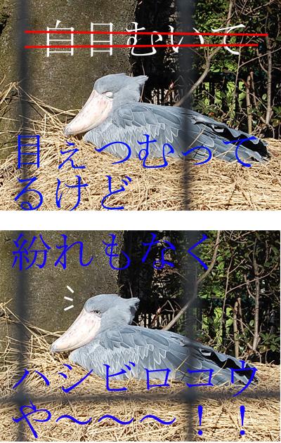 f0042255_1050042.jpg