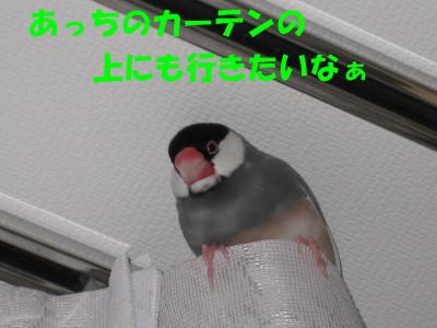 b0158061_20193769.jpg