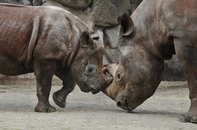 上野動物園 2_f0018464_18542350.jpg