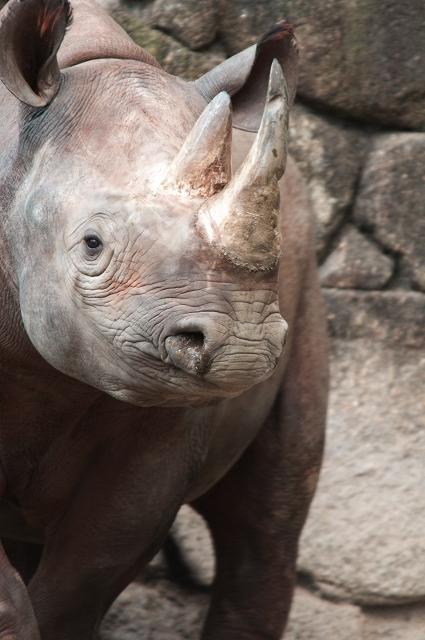 上野動物園 2_f0018464_18543164.jpg