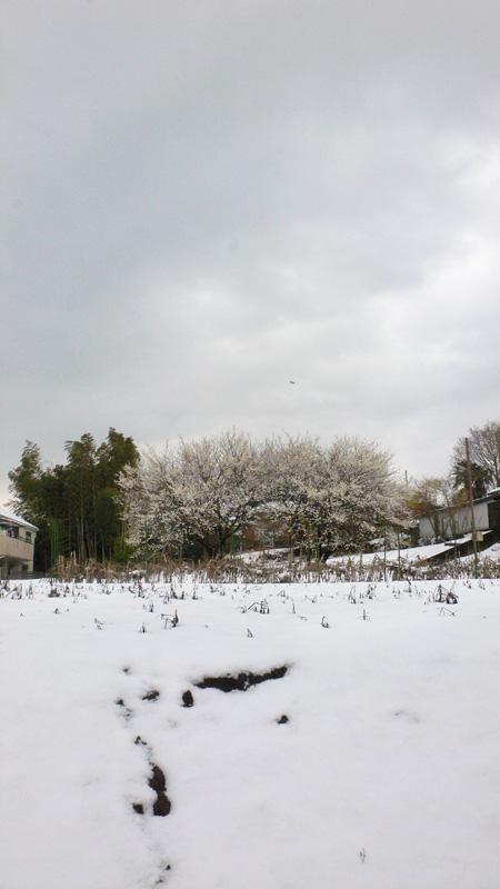 雪雪雪_b0035072_082795.jpg