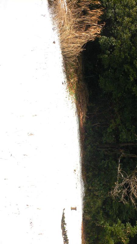 雪雪雪_b0035072_08791.jpg