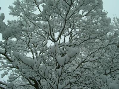 ■10.2.2~雪だ!_a0157274_1061095.jpg
