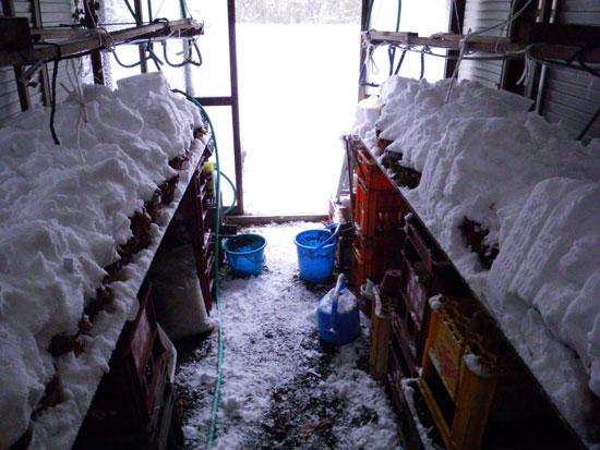 雪布団と雀と、ついでにHuuちゃん♪_a0136293_1525815.jpg