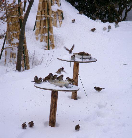 雪布団と雀と、ついでにHuuちゃん♪_a0136293_15414386.jpg
